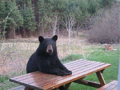 bear at picnic table