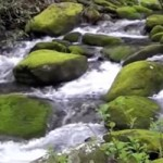 Drive the Roaring Fork Motor Trail
