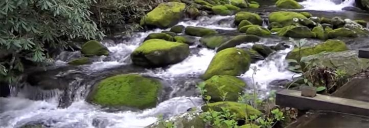 Roaring Fork Motor Nature Trail - Auto Tour the Smokies